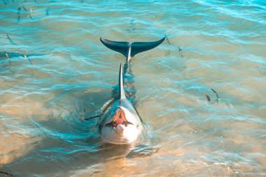 Wild dolphin off coast of Western Australia