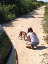 Woman helping dog in the middle of the road