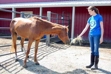 rescue horse overgrown hooves