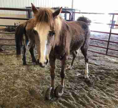 iowa pony rescue