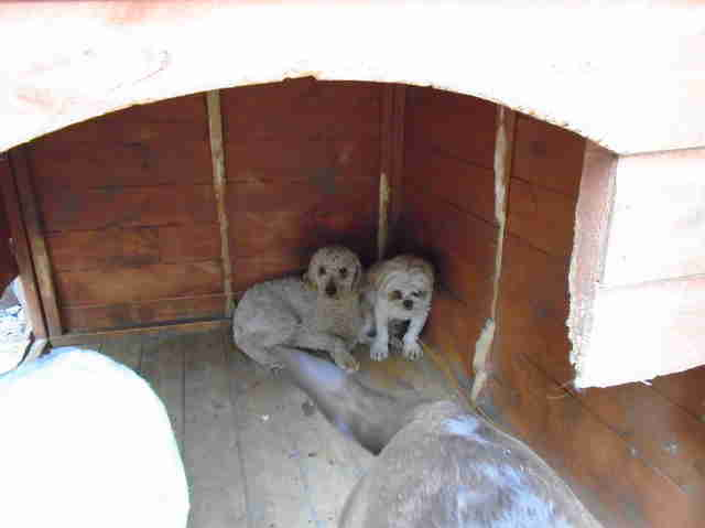 puppy farm dogs rescued