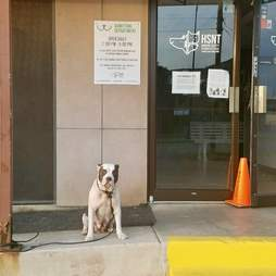 pit bull abandoned shelter texas