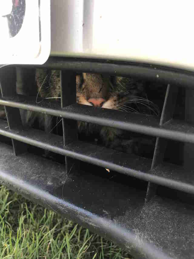 cat stuck under car for 80 miles