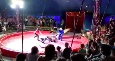 Bear being beaten in circus performance