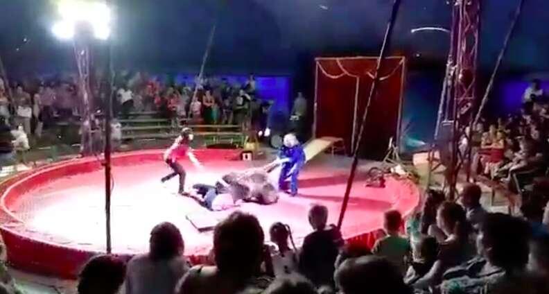 Bear being beaten in circus performance