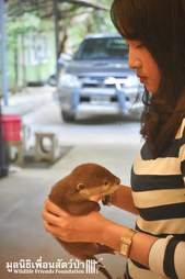 Woman holding rescue otter in her hands