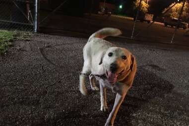 Reporter finds pregnant dog tied to shelter gate
