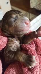 Janelle's first puppy