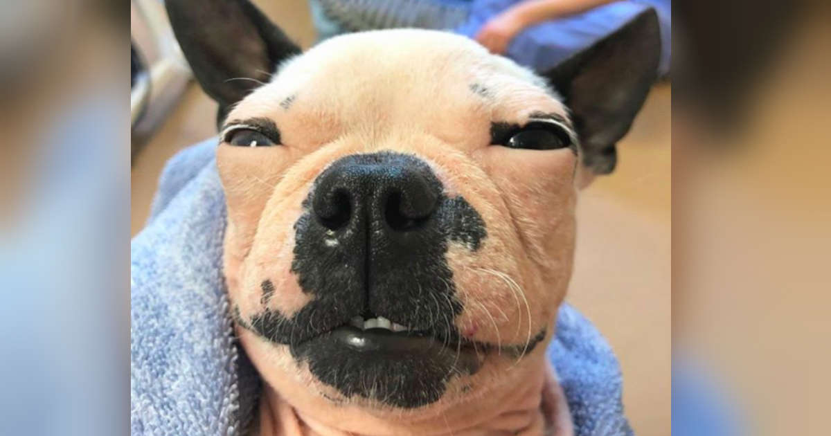 Dog Who Lost Her Hair In Puppy Mill Still Has The Best Smile