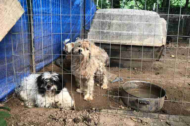 Neglected dogs at a potential puppy mill in Georgia