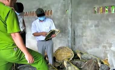 poached turtles vietnam
