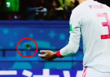 Spain's Gerard Pique saving bird from World Cup pitch