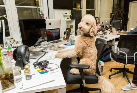 Here Are the Pet-Friendliest Employers of 2018