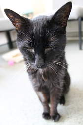 18 year old cat needs a home