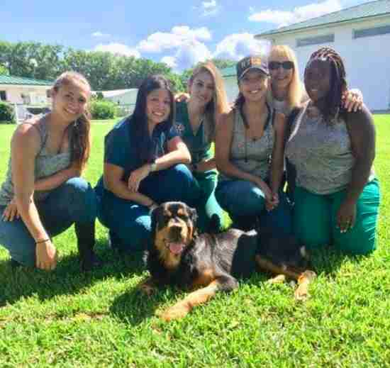 florida rottweiler rescue dumped