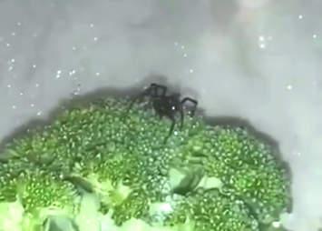 black widow broccoli