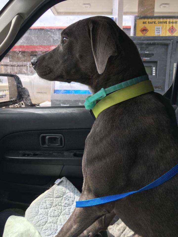 Dog sitting in front seat of car