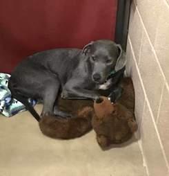 Dog sitting in corner of kennel with teddy bear