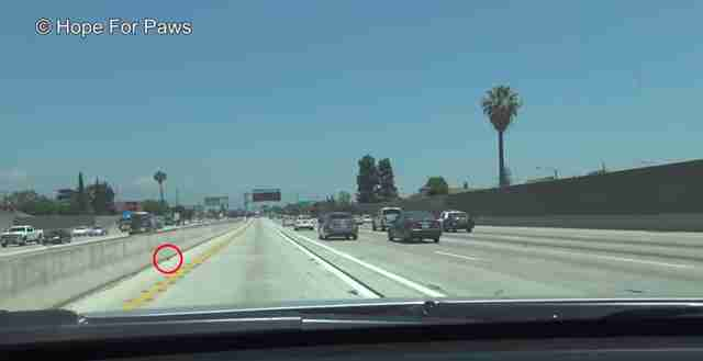 kitten thrown onto freeway