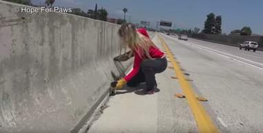 kitten thrown onto highway