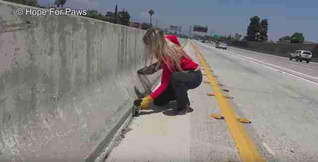 kitten thrown onto highway