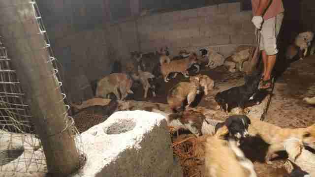 Dogs trapped inside Chinese slaughterhouse
