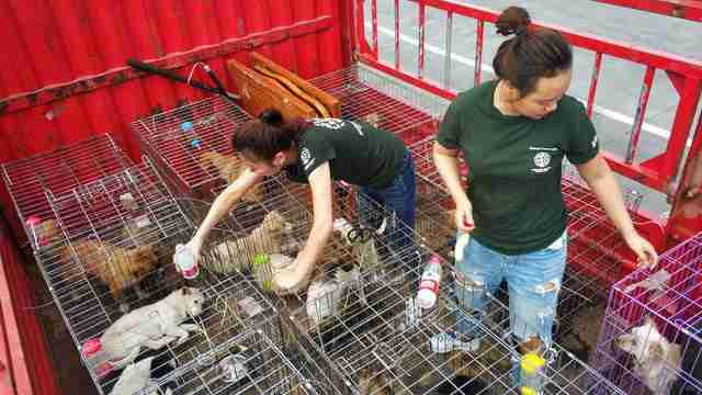 Rescuers helping dogs saved from slaughterhouse