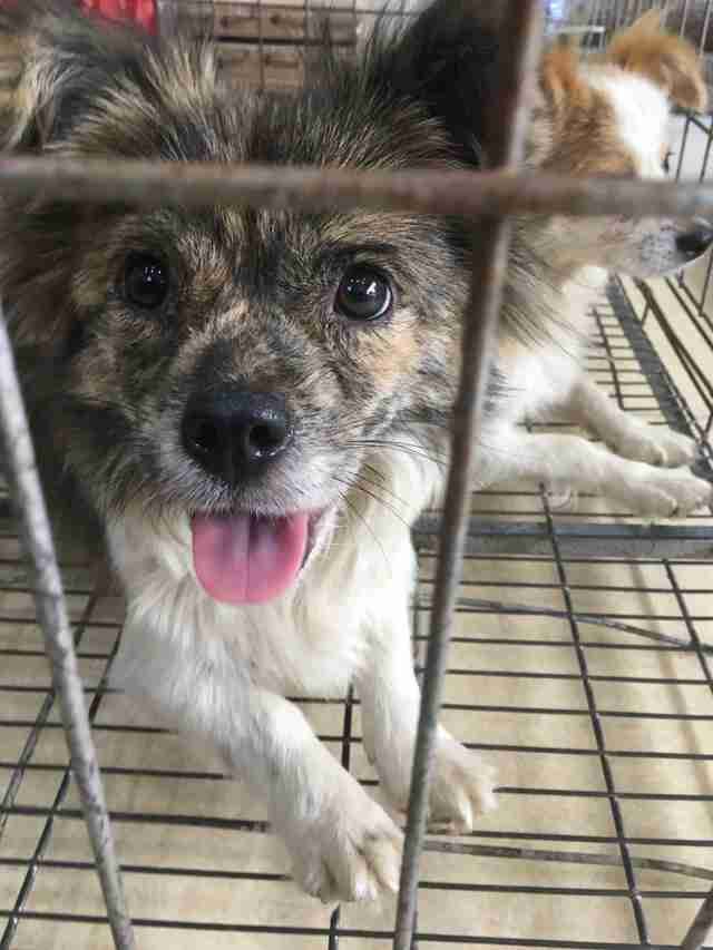 One of the rescued dogs inside transport cage
