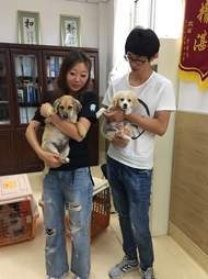 People holding rescued dogs