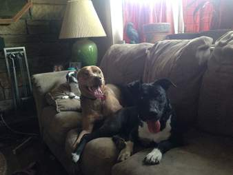 Dogs relaxing on couch