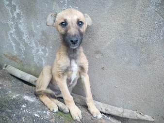 Skinny puppy sitting on concrete