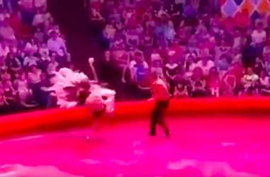 Panicked circus ostrich's attempted escape in Russia