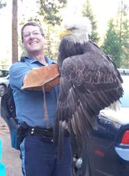 Cop saving injured bald eagle in Oregon