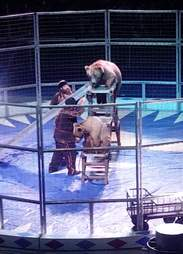 Circus bear being forced to climb ladders