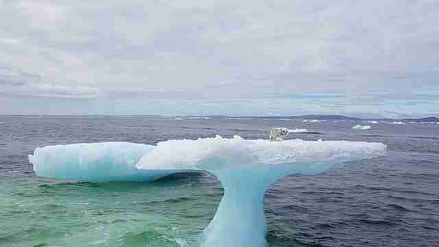 People Notice Someone Strange Stranded On An Iceberg Miles Out At Sea