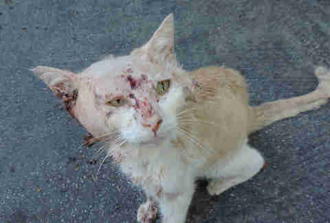 Stray Cat Was In Such Bad Shape People Couldn't Tell What He Was