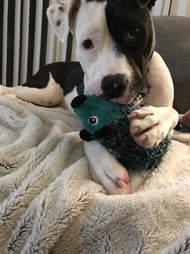Toy cuddling with green hedgehog toy