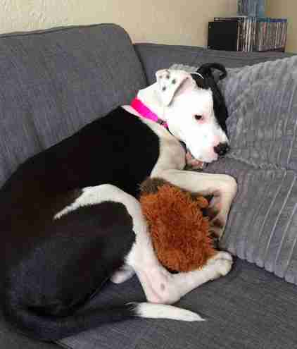 Dog snuggling with stuffed animal