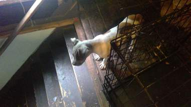 dog chained up in attic and basement