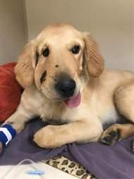 dog rescues owner rattlesnake
