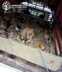 dog meat trade rescue india