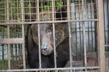 Bear saved from hunting station in Ukraine