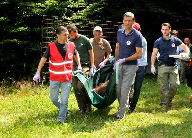 Bear being rescued from hunting station in Ukraine