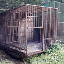 A bear was rescued from this cage at hunting station in Ukraine