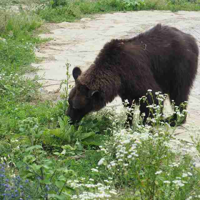 Bear rescued from hunting station arrives at sanctuary