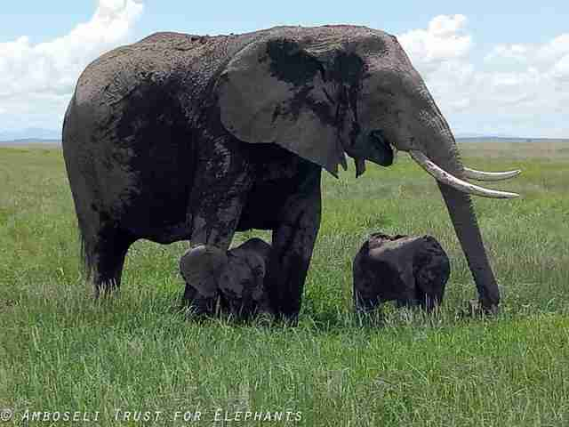elephant twins pictures