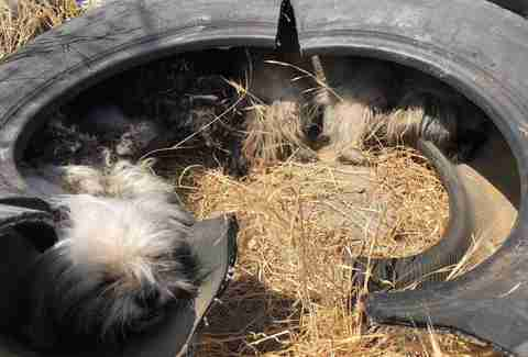 Three dogs snuggle inside a tire