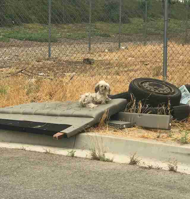 Abandoned dog sits on tire