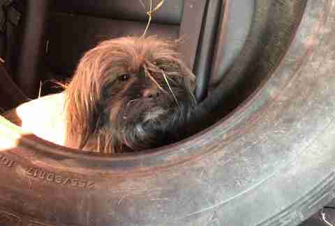 Dog sits inside tire in backseat of car