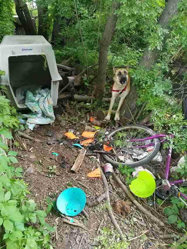 German shepherd abandoned in woods